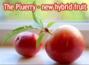 Pluerry fruit