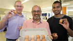 Scientists working at creating allergy-free eggs