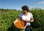 Science reporting on organic food is out to lunch