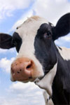 FDA introduces strategy to reduce overuse of antibiotics in animals grown for food