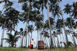 Why the coconut craze isn't helping farmers