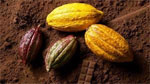 Cargill close to agreeing purchase of ADM cocoa unit?