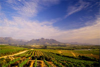 PIWOSA promotes top SA wines in the UK market