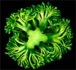 Monsanto vegetables