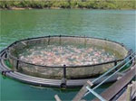 World Bank: Fish farms to supply two thirds of global food fish by 2030