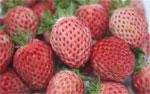 'Bubbleberries' go on sale in UK