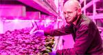 LED farming