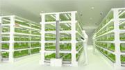 Toshiba high-tech farming