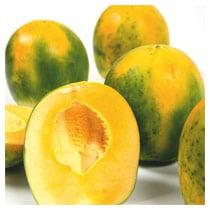 FLIA-Papaya