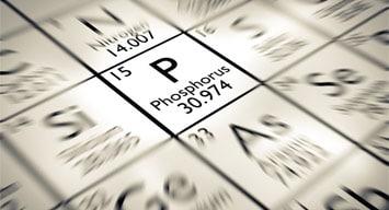 Phosphorus L