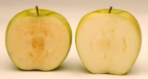 Artic GM apple