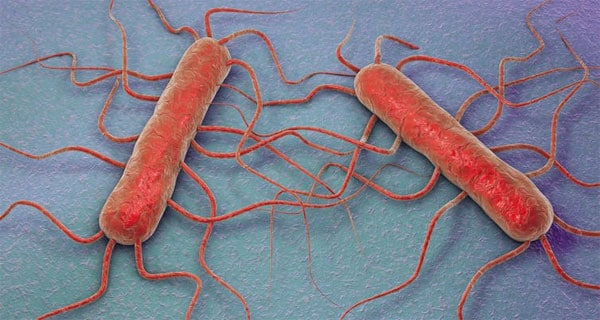 Today's Listeriosis news wrap: Listeriosis deaths hit 189, class action launched, WHO weighs in
