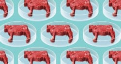 US food regulators smooth path to market for cell-based meat
