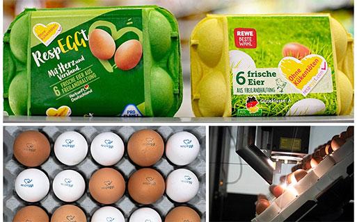 Huge step for animal welfare: introducing no kill eggs