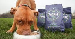 UK: Dog food made from insects to go on sale for first time