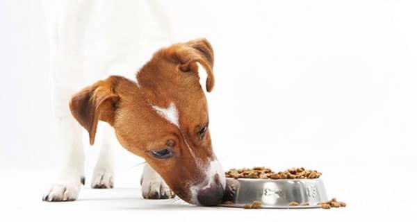 Making pet food more human – download free e-book