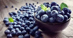 SA blueberry production – and employment – skyrockets to all-time high