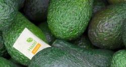 New take on slowing avocado ripening