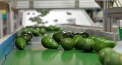 WANTED! Fruit Processing Specialist, Balfour, Mpumalanga