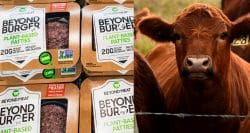 Investor funding burgeons in plant-based proteins, but it hasn't decreased meat consumption